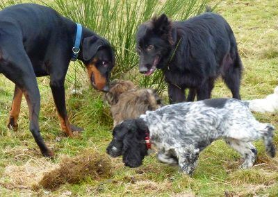 dogs sniffing long grass