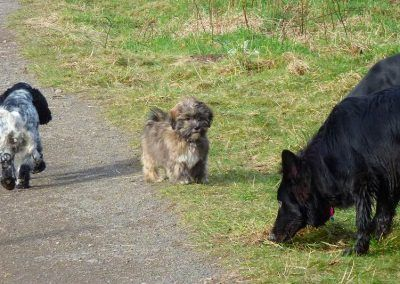 Young puppy watching older puppy