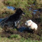 Skye and Mack enjoy getting filthy!