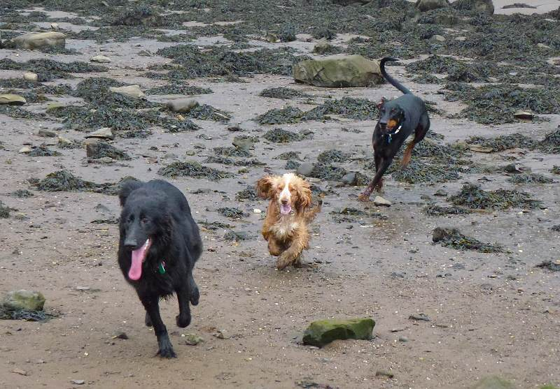 Penny, Rory and Skye take a trip to Erskine beach!