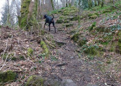 Rory leads us through the scout trail!