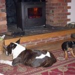 Wilf and Chilli enjoying the woodburning stove!