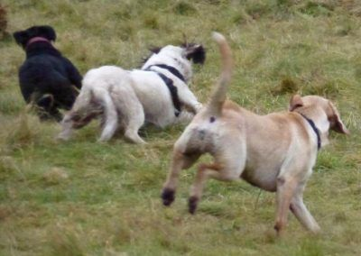 Beau loves to get chased!