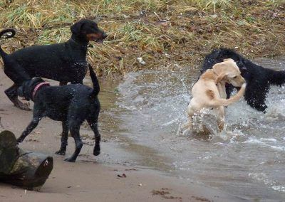Friendly, young dogs playing!