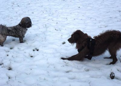 Dog play bow in snow