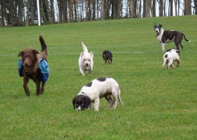 dog walking at the parklea playing fields