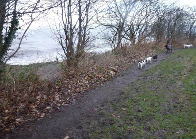 dog walking in stormy weather