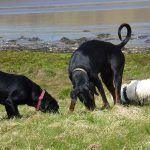 dogs sniffing grass