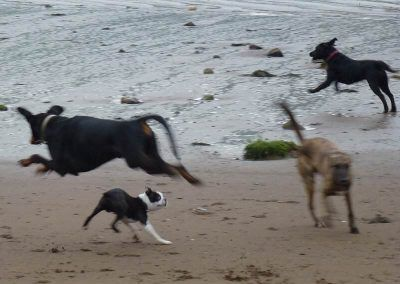 dog jumping over dog