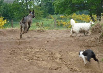 dogs running on the beach at Erskine