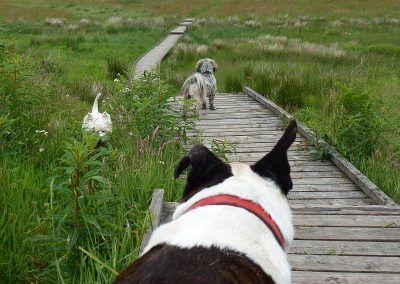 Wilf watches the others cross the bridge!