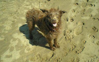 Ruby visits Erskine beach