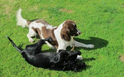 A warm welcome to Daisy and Duffy, Bailey and Patch