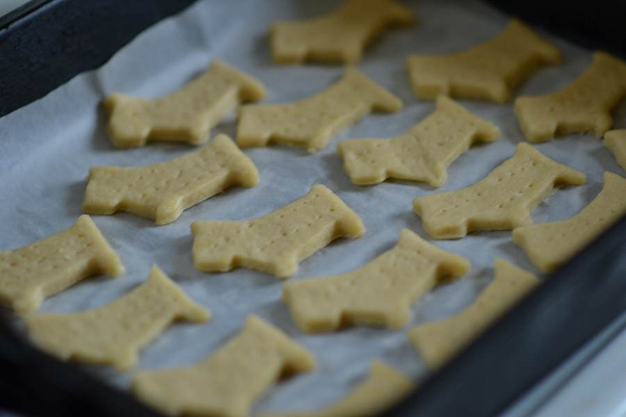 dog biscuits on baking tray