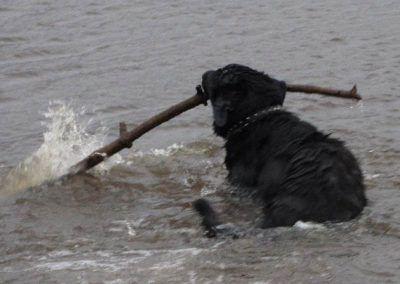 Get that stick!