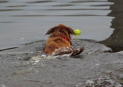 Ruby swims out to get her ball!