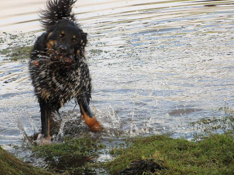 Dog walking all over Renfrewshire