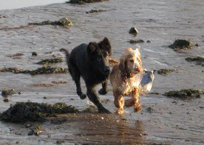 Puppies chasing each other on the beach in Erskine