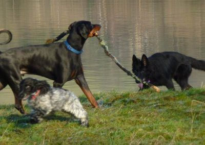 Rory with stick and Jersey tries to get Skye to play
