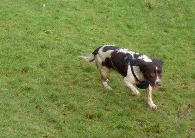 Daisy with ball!