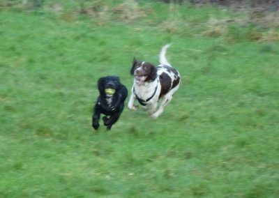 Duffy loves to get chased by Daisy!