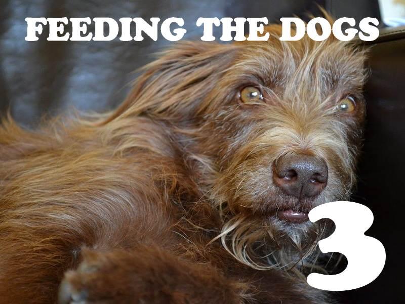 Feeding the dog(s)… Part 3