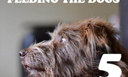 Feeding the dog(s)… Part 5