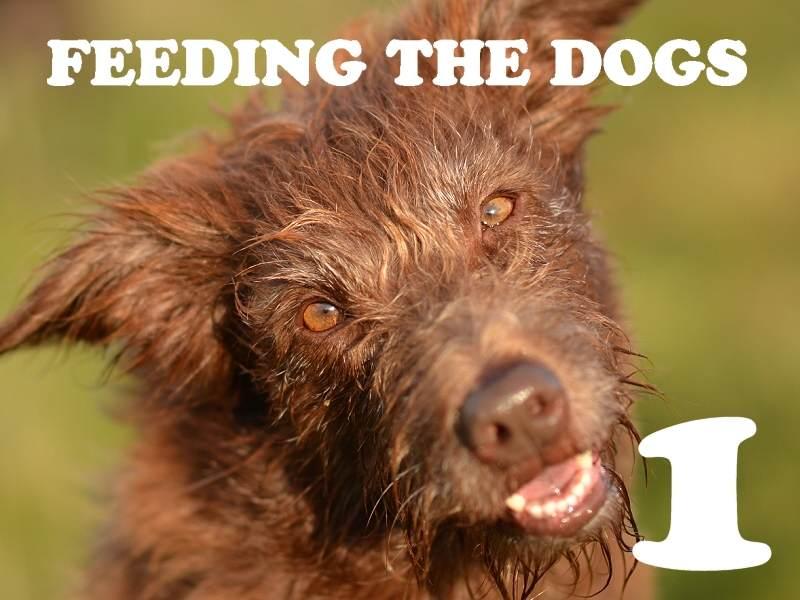 Feeding the dog(s)… Part 1