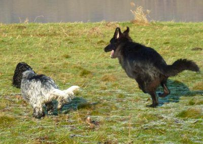 Jersey gets her chase from Skye!
