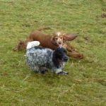 dogs playing in Erskine