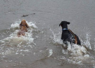 Penny and Rory go after stick!