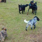 dog walkng at erskine