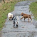 dogs running in Erskine