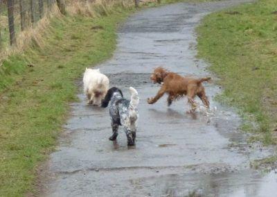 Mack gets chased!