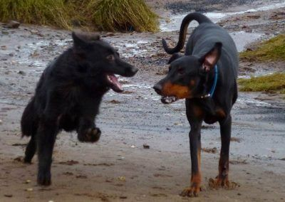 Dogs running side by side