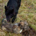 puppies running