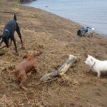 Group dog walking in Renfrewshire