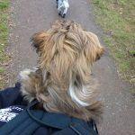 puppy in puppy carrier