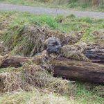 puppy hiding in long grass