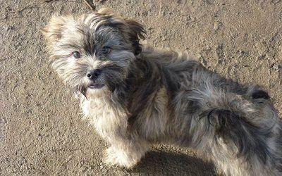 Ruffles goes puppy walks!