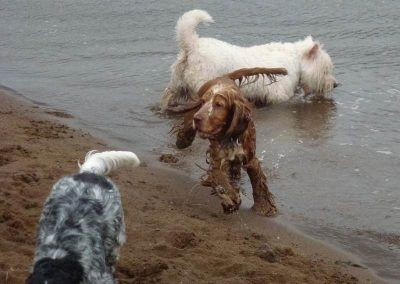 Dogs love to get dirty!