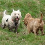 dogs covered in mud