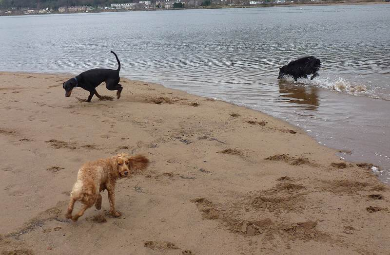 The gang running on the beach!
