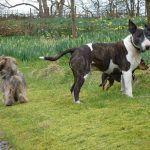 The chaps enjoyin Finlaystone gardens
