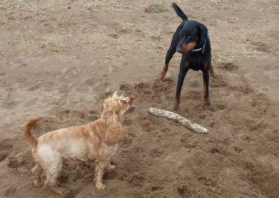 Rory has never been told to give up his stick before!!