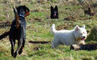 Rory, Skye and Mack!