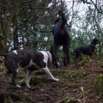 Wilfred, Chilli and Rory go dog walking in Finlaystone