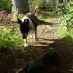 Walking through Finlaystone