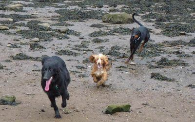 Penny, Rory and Skye!
