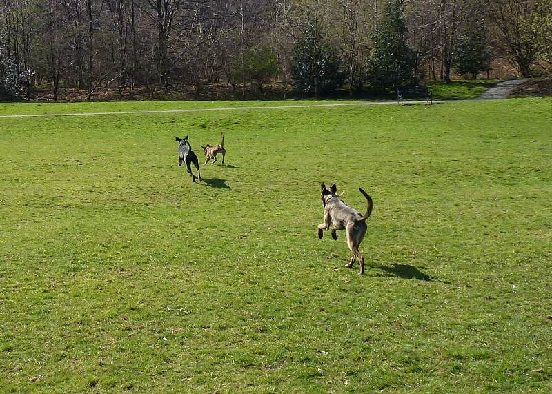 Rory and the lurchers!